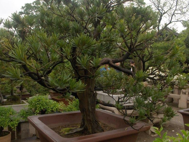 Suzhou_049